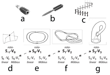 Figure 22: The Mobius strip biology