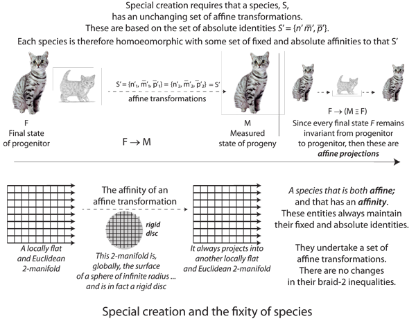 Figure 45: Affine transformations and the fixity of species